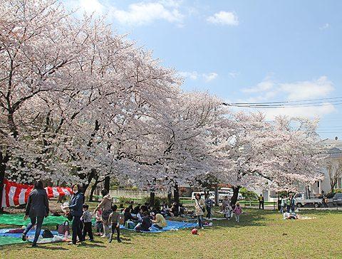 平成27年度入社式と新入社員歓迎花見会を行いました。