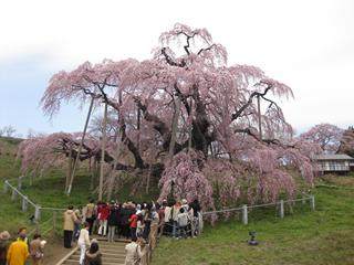 林 直清社長が、全日福島県本部主催の法定講習会を視察しました。